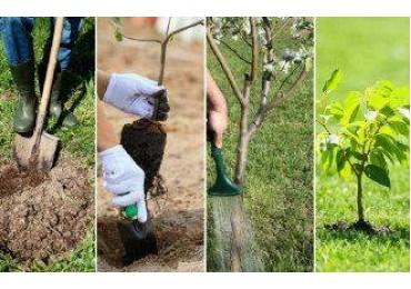 Посадка деревьев в осенний период