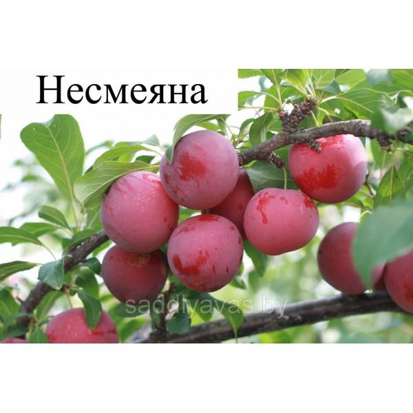 Алыча Несмеяна